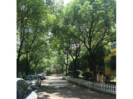 亭川北区精装房拎包入住3楼