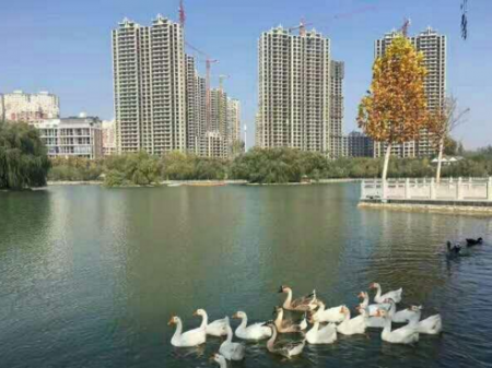 巩义悦湖会 毛坯房 113万